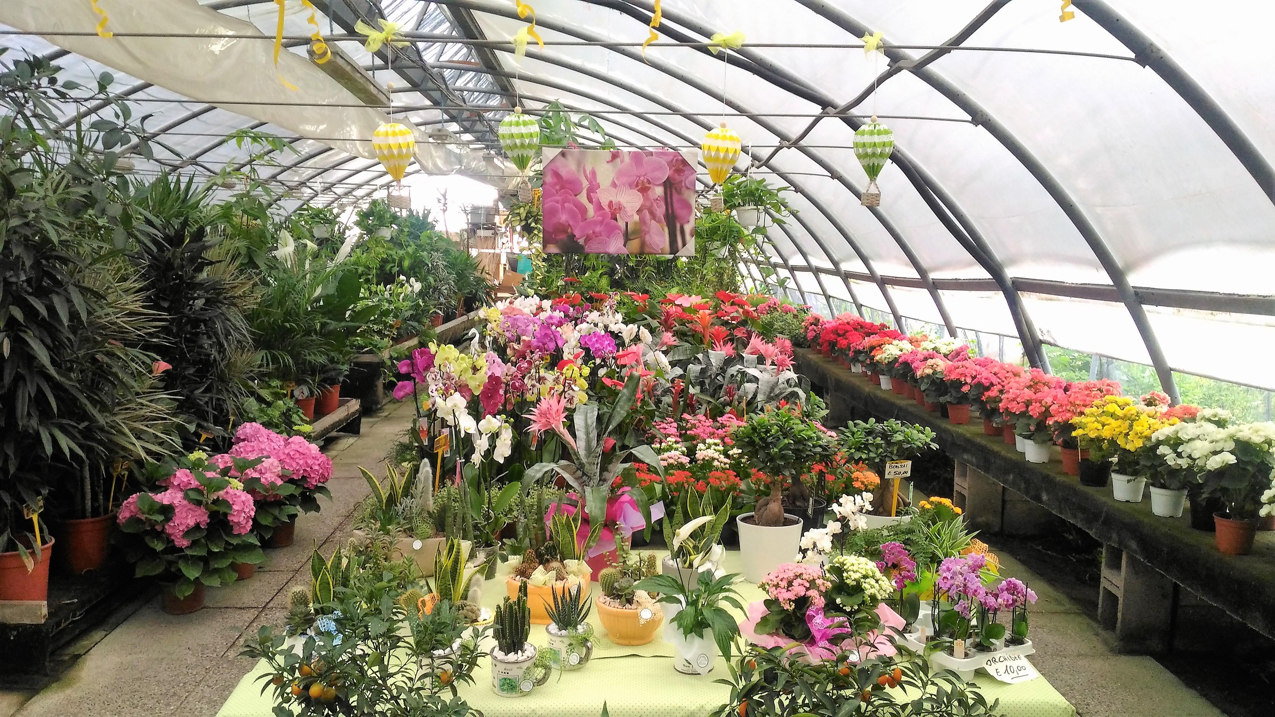 Carboni Correggio Arredo Bagno.Flor Garden Di Carboni Maurizio Vivai Articoli Da Regalo